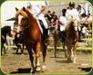 Mostra del cavallo